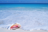 Mexico, Yucatan Peninsula, Carribean Beach at Cancun, Conch Shell on Sand Photographic Print by Chris Cheadle