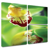 Cymbidium Sea Foam Emerald Orchid Gallery-Wrapped Canvas Stretched Canvas Print by Kathy Yates