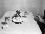 Little Squirrel Dressed-Up as Nurse with American Flags Photographic Print