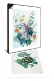 Primula Auricula & Study of Lilac, Capucine and Fuchsia Set Prints by Pierre-Joseph Redouté