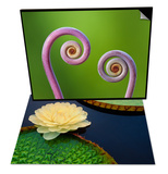Giant Water Lily, Pantanal, Brazil & Uluhe Ferns, Hawaii Volcanoes National Park, Hawaii Set Poster by Frans Lanting