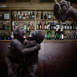 Monkey Bar (Drunk Monkeys) Art Poster Print Prints