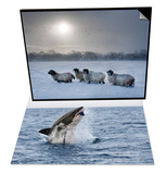 Great White Shark, Seal Island, Cape Town & Northumberland Blackface Sheep in Snow, England Set Posters by Ann & Steve Toon
