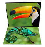 Parson's Chameleon, Calumma Parsonii, Madagascar & Toco Toucan, Ramphastos Toco, Brazil Set Prints by Frans Lanting