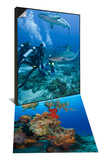 Sea Turtle Swimming over the Coral, Mexico & Caribbean Reef Shark with Divers, Honduras Set Posters by Antonio Busiello
