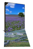 Inishmore, Aran Islands, Connacht, Eire (Republic of Ireland) & Bluebells, Dartmoor, England Set Poster by David Lomax