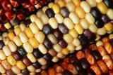 Indian Corn Photographic Print by Tom Bean