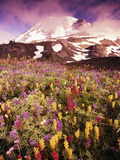 Wildflowers Growing at Foot of Mount Rainier Photographic Print by Stuart Westmorland