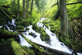 Wahkeena Creek and Surrounding Trees Photographic Print by Craig Tuttle
