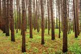 Pine Grove, La Seigneure Des Aulnaies, Quebec, Canada. Photographic Print by Barrett & Mackay