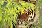 Bengal Tiger Hiding behind Leaves Photographic Print by  DLILLC