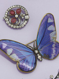 Victorian Butterfly Brooch Photographic Print