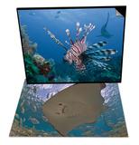 Stingray, Cozumel, Mexico & Lionfish and Caribbean Reef Shark Roatan, Honduras Set Prints by Antonio Busiello