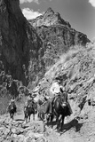 Mule Riders on Kaibab Trail Photographic Print by Philip Gendreau