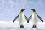 Two Penguins Holding Hands Photographic Print