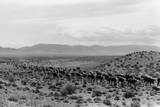 Cattle Drive through Desert Photographic Print by Hutchings, Selar S.