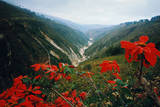 View of Flowers and Valley Photographic Print by Frank Johnston