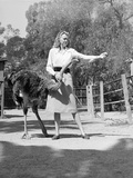 Woman Feeds Ostrich Orange on Farm Photographic Print by Philip Gendreau
