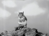 Close-Up of Squirrel Photographic Print by Philip Gendreau