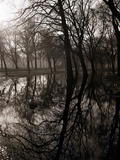 Water Reflecting the Trees of Victoria Park Photographic Print