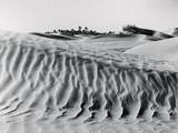 Sand Dunes with Oasis Photographic Print