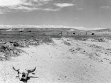 Drought Scene with Bleached Skull Photographic Print