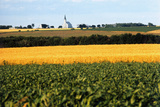 Cornfield with Church in Background Photographic Print