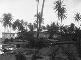 Coconut Trees Lying across Rr Tracks Photographic Print