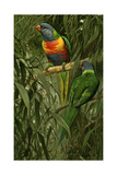 A Pair of Rainbow Lorikeets, 1890 Giclee Print by Alfred Brehm
