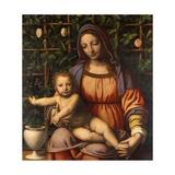 Madonna in Rose Garden Giclee Print by Bernardino Luini
