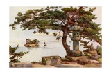 Pine-Tree at Matsushima Giclee Print by Ella Du Cane