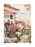 Chrysanthemums Giclee Print by Ella Du Cane