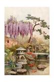 Wistaria in a Kyoto Garden Giclee Print by Ella Du Cane