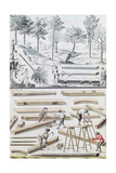 Ms 131K Different Species of Tree and Sawing Logs, from 'Traite De Fortifications' Giclee Print by Claude Masse