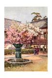 Cherry Blossom, Chion-In Temple Giclee Print by Ella Du Cane