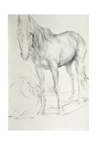 Horse at Coolmore, 1990 Giclee Print by Antonio Ciccone