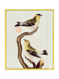 Pair of Siskins, from 'Histoire Naturelle Des Oiseaux' Giclee Print by Francois Nicolas Martinet