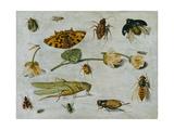 Insects Giclee Print by Jan van Kessel the Elder