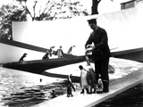 Lubetkin Penguin Pool, January 1934 Photographic Print by Frederick William Bond