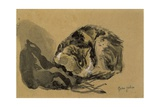 Study of a Cat, 1905-08 Giclee Print by Gwen John