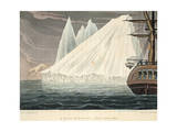 A Bear Plunging into the Sea, Illustration from 'A Voyage of Discovery...', 1819 Giclee Print by John Ross