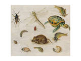 A Study of Insects, Sea Creatures and a Mouse Giclee Print by Jan Brueghel the Younger