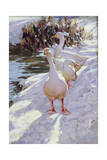 Geese in Snow Giclee Print by Paul Gribble
