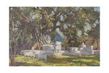 Kawardha Well and Banyan Tree Giclee Print by Tim Scott Bolton