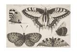 Five Butterflies Giclee Print by Wenceslaus Hollar