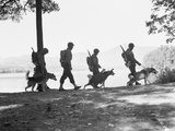 Soldiers and their Dogs Walking along the Shore Photographic Print