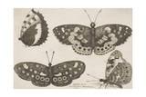 Four Butterflies Giclee Print by Wenceslaus Hollar