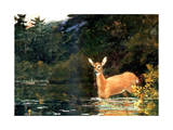 A Doe, 1889 Giclee Print by Winslow Homer