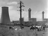 Cattle near Nuclear Power Plant Photographic Print by Charles Rotkin