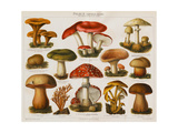 Different Types of Poisonous Mushrooms Giclee Print